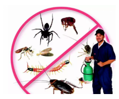 Pest control services only 999All over Mumbai services bed bugs cokro