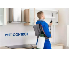 Wanted Pest control operator