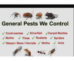 Indian hygiene pest control service.